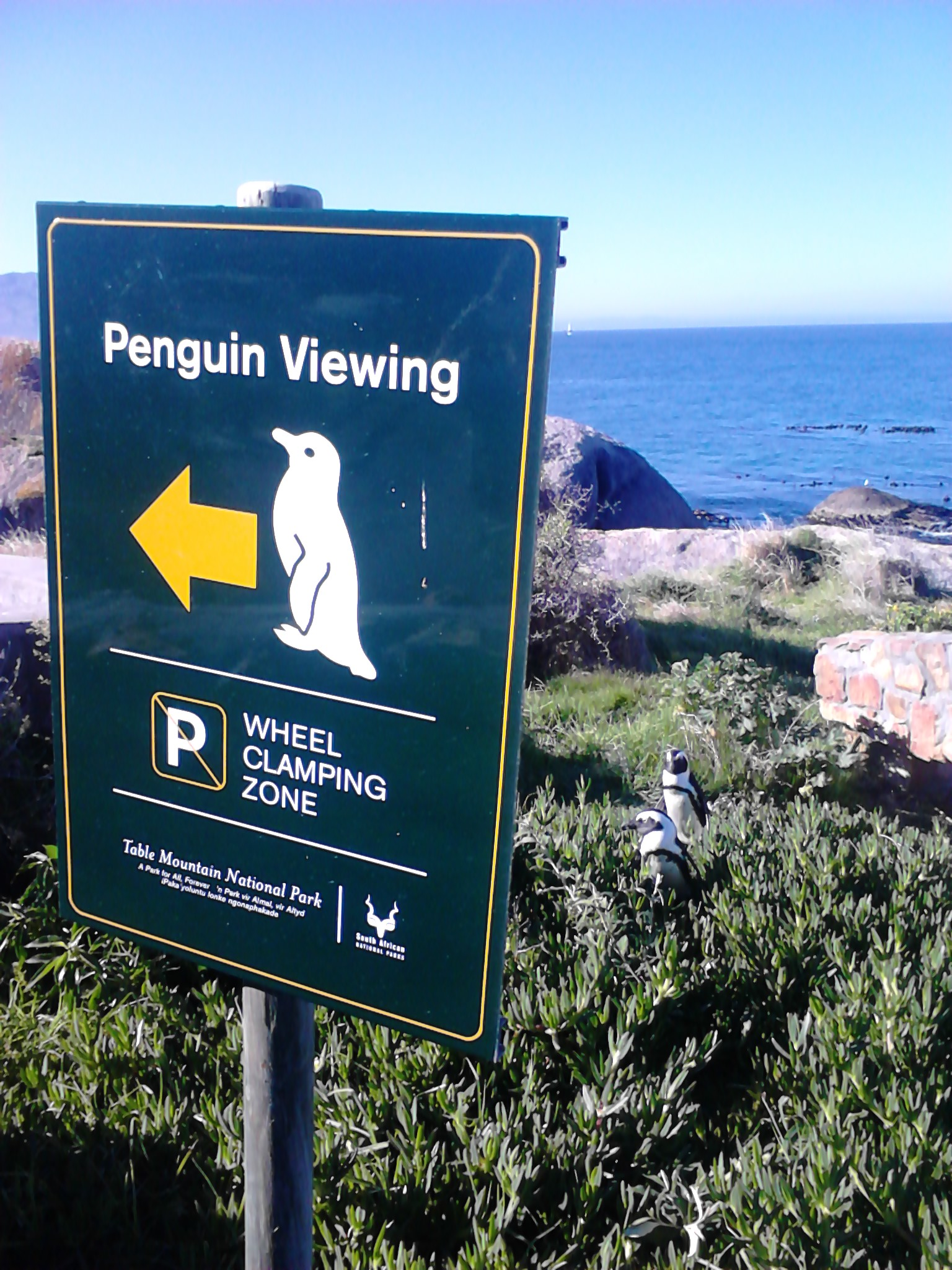 penguins!!